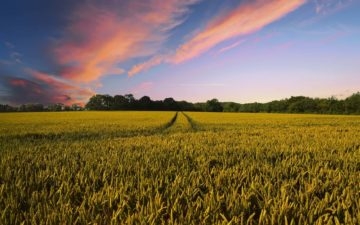 The future of precision agriculture