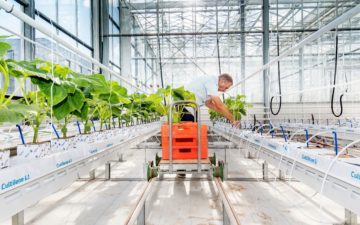 Artificial Intelligence enters the greenhouse